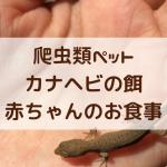 爬虫類ペット③|カナヘビの餌は何をあげる? 赤ちゃんの食事編